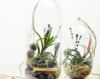 Air Plant Terrarium// Hanging Terrarium// Tall Glass Orb// Lavender// Living Home Decor