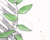 Green watercolor plant illustration with a little bit of pen and ink graphics.
