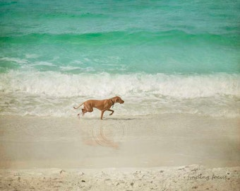 Dog Days of Summer Animal Photography, Dog Playing Surf Beach Aqua Waves & Shoreline, Playful Art Summer Photo, Dog Lover Walk on the Beach