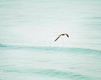 Ocean Bird Flying Beach Photography, Light Teal Rolling Waves Dreamy Seagull Water Cottage Art Nautical Marine Morning Light at the Seashore
