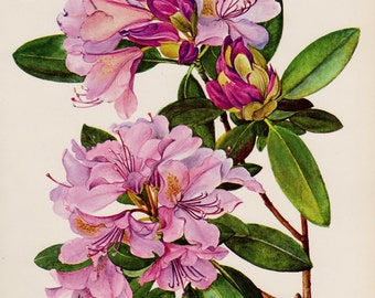 Girly Wall Art Purple Flower Decor Purple Rhododendron Botanical Print Purple Gallery Wall Art Decor  Shrub 2634