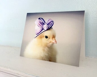 Chicken Card Chick in  A Miniature Purple Ribbon Hat Chicks in Hats Baby Animal Stationary