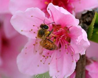 Pink Flower & Honey Bee Art, nature photography, girl nursery wall decor, honeybee print, macro photography, fine art photo