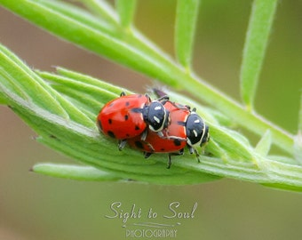 Cute Ladybug Art, red green nature photography, lady bug art, macro photography, insect print, ladybug love photo