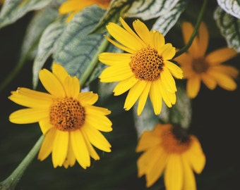 little yellow petals - floral nature photography
