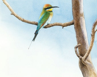 Rainbow Bee-eater Original Watercolour Painting