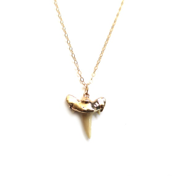 Real Shark Tooth Necklace