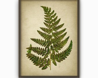 Fern Green Antique Botanical Art Print - Vintage Botanical Home Decor - Antique Book Plate Illustration - Giclee Forest Fern Picture (B95)
