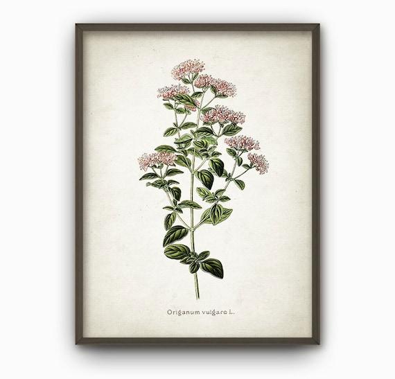 oregano kitchen wall art print antique botanical home decor. Black Bedroom Furniture Sets. Home Design Ideas