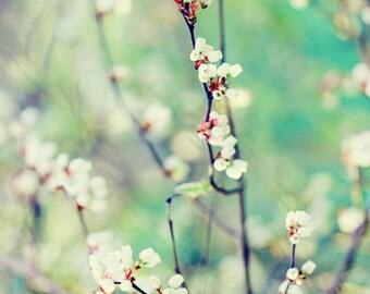 Flowers in Aqua - Photo Print, flower photography, spring, botanical art print