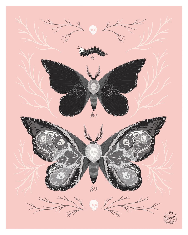 death u0026 39 s head hawk moths      digital illustration print