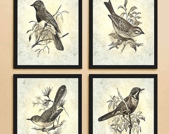 Vintage Bird etchings 4 Set art prints - Perfect Gift, wonderfull wall decor- Buy 3 get 1 Free! Songbirds specially re-created for your wall