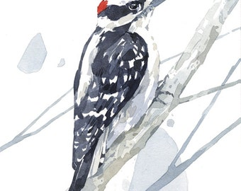 Downy Woodpecker watercolor print - woodland painting, bird watercolor 5x7
