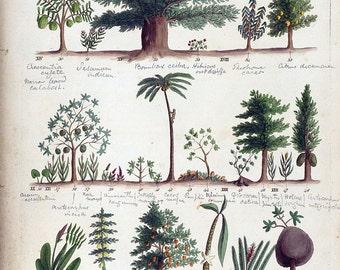 antique botanical print tropical fruit trees illustration DIGITAL DOWNLOAD