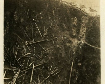"Vintage Photo ""Abstract Woodland Destruction"" Tree Snapshot Photo Old Antique Photo Black & White Photograph Found Photo Paper Ephemera - 02"