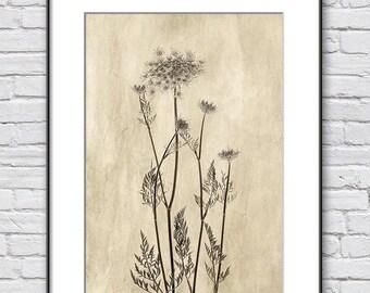 Minimalist Home Decor Print, Sepia Art Print, Antique Botanical Print, Sepia Photography of Queen Anne's Lace