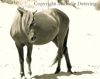 Wild Horse Photography - Digital Photography, Horse Art, Horse Decor, Wild Horse, Assateague Horse, Nature, Wildlife Art, Pony, Beach Horse