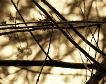 "Nature Photography, Autumn, Fall, Trees - ""Autumn in Florida"", Sepia, Branches"
