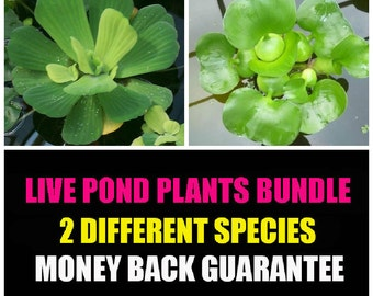 Water Lettuce and Water Hyancinth Bundle - Floating Live Pond Plants