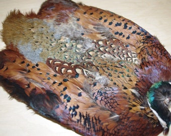 Ringneck Pheasant Skin, Fly Tying, Craft Feathers