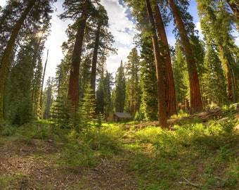 Sequoia Forest, Cabin, California, Sunset, HDR