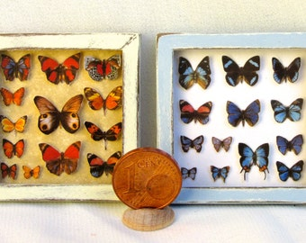 butterfly collection, framed, 1/12 scale