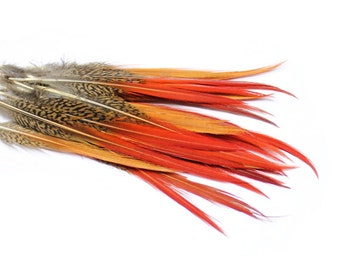 Red Tipped Golden Pheasant Feathers 6-8"
