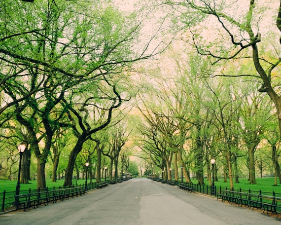 Nature Photography, Landscape Photography, Nature Wall Art, Tree Print,  Central Park, NYC, New York City Photo, Green Decor, Green Wall Art
