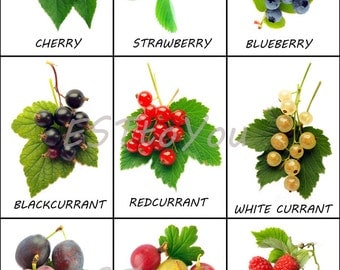 Montessori learning item, Word cards digital printable, direct download picture cards for kids, berry photography, photo cards, berry cards