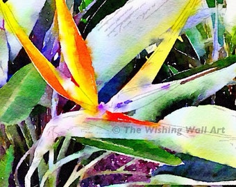 Birds of Paradise Exotic Flower Print - New Wall Art