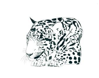 Peruvian Jaguar, print