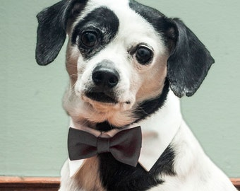 Classy Black Bow Tie for Dogs