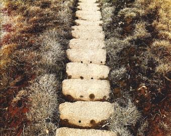 Cursed Path