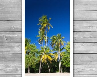 Coconut Palms on Tropical Island, Travel Photo, Caribbean, Palms, Beach, Fine Art Photo, Beach Print, Beach Poster, Wall Prints, Tropical