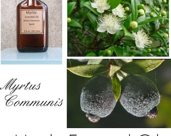 Myrtle  Essential Oil, Myrtle Oil, Myrtle Essential Oil Uses, Myrtle Essential Oil Benefits