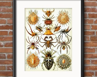 Spider Poster, Spider Art Print, Ernst Haeckel Arachnid Scientific Illustration, Natural History Art, Wall Art - 0395