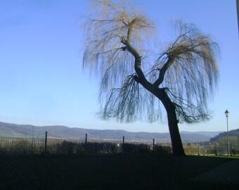 Tree game, original photography: 20 x 30 cm