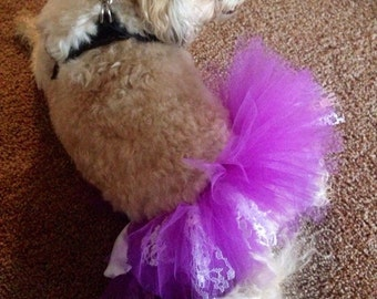 Tutu for Dogs