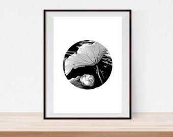 Black and White Photography, Lotus, Printable Poster, Wall Art, Wall Decor, Home, Office, Photography, Lotus Leave, Lotus Bloom, Lake, Pond
