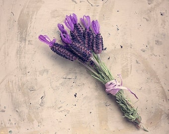 Lavender, Fine Art Photography