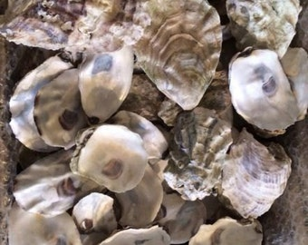 120 Oyster Shells Mixed Size Clean -Craft-