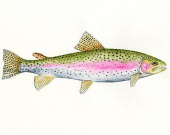 Rainbow Trout Fish Painting Art Print