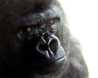 Wildlife Portrait 3 - Gorilla