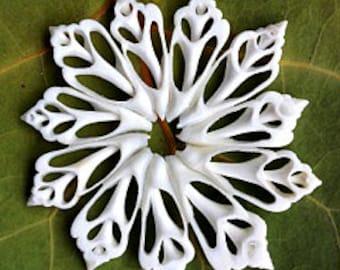 Sliced Caribbean Seashell Ornament