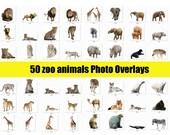 50 different zoo animals Photo Overlays, Photography Overlays, Digital Download, jpg file Scrapbooking Animal Overlays