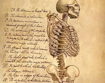 x12 Anatomy Print Collection