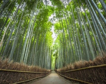 Kyoto Art Print, Large Wall Art, Bamboo Forest, Japan Photography, Landscape Photograph, Nature Art Print