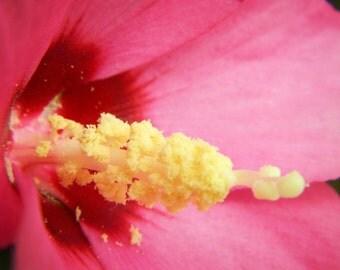 Pink Hibiscus Canvas 3