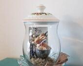 Class Cloche Arrangement , Rabbit Under Glass,  Assemblage Art,  Mother's Day Gift Idea