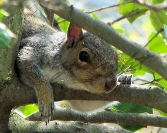 Squirrel Photo Wall Art Home Decor 8x10 Photo Wildlife Photography